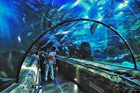 Sea World inside Ancol Dreamland.