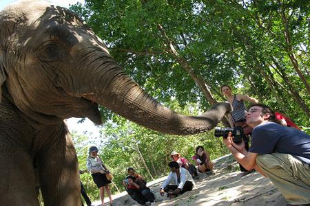 Elephant in Phnom Tamao Wildlife Sanctuary
