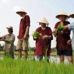 Farming-in-Hoi-An-shore-excursions