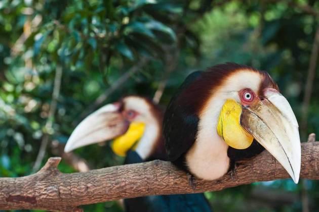 Langkawi Mangrove Safari