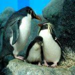 Langkawi-shore-excursions-Underwater World