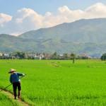 Lush countryside in Nha Trang