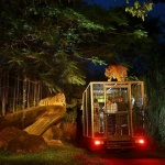 Night Safari Park Singapore 1