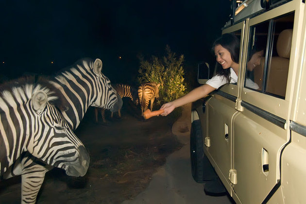 Night Safari Park Singapore 2