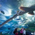 Underwater-World-Sentosa-Island