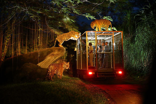 night safari park singapore