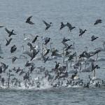 Birds in Nakdong River Eco Center