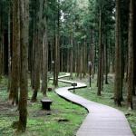 Jeolmul Forest Park