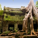 Ancient tree in Tah Prohm Temple, Siem Reap, Cambodia