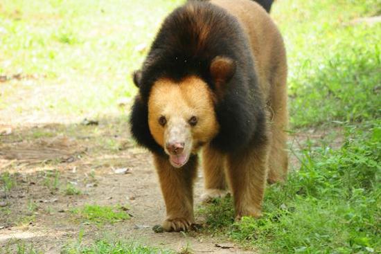 Bear at Phnom Tamao Wildlife Sanctuary