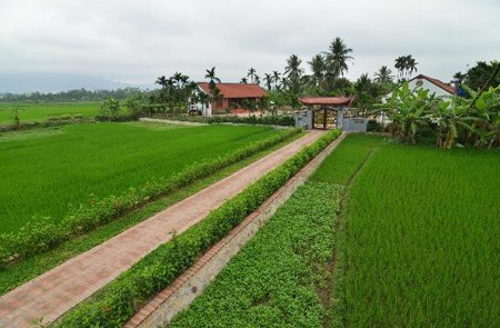 Rice paddy fields in Yen Duc Cultural Village