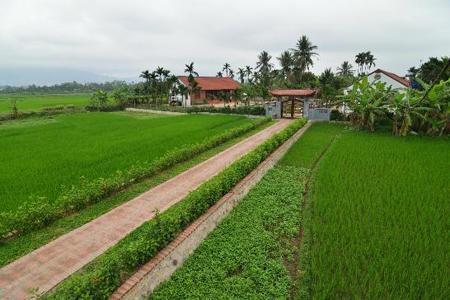 Rice paddy fields in Yen Duc Cultural Village