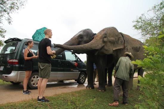 Visitors feeding elephants at Phnom Tamao Wildlife Rescue Center