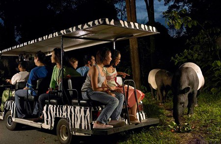Night Safari Park