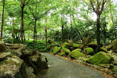 The Evolution Garden, Singapore Botanic Gardens