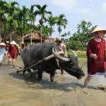 Farming in Hoi An eco tour