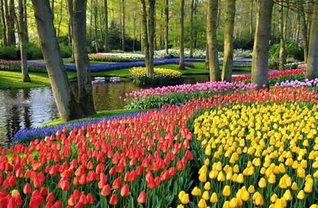 Amsterdam Shore Excursion Keukenhof Gardens & Tulips Fields Trip
