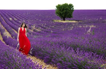 Marseille Shore Excursion Aix-en-Provence & Valensole Lavender Private Trip