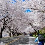Spring weather in Korea
