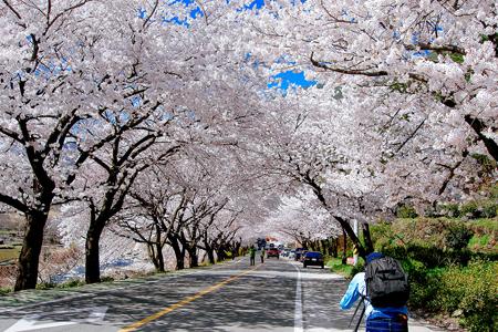 Korea Weather