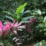 Hidden Valley is a refreshingly green botanic garden