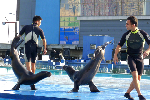 Sea Lion Show on Manila Ocean Park