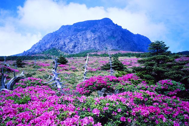 Spectacular landscape of Jeju - South Korea
