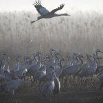 Cranes Nature Park