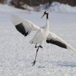 Kushiro Cranes Nature Park