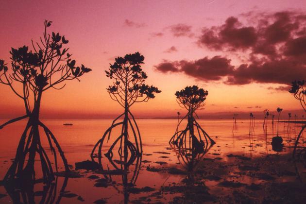 Nagura Bay at dusk