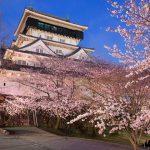 Kokura Castle Cherry
