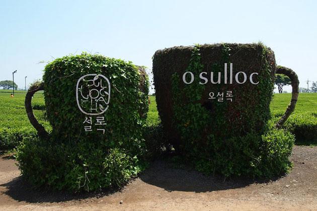 O'Sulloc Green Tea Museum