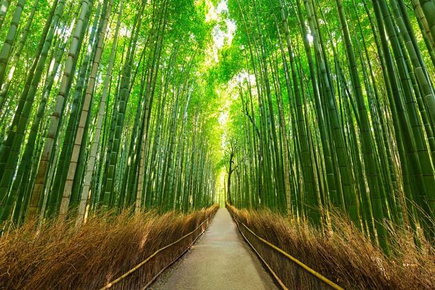 Arashiyama bamboo Kobe shore excursions