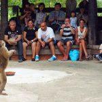 Monkey show in Koh Samui