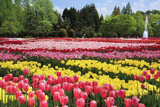 Tonami Tulip Gallery Toyama