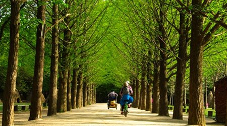Nami Island and Petite France