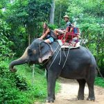 Elephant-Ride-in-Koh-Samui