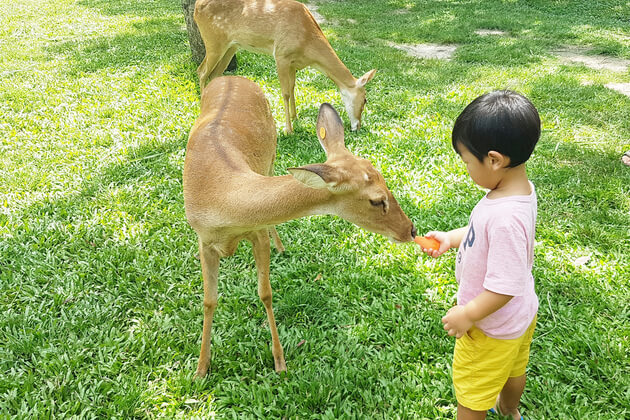 Playing-with-animals-Khao-Kheow-Safari