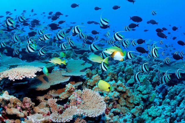 Sea Animals in Koh Samui