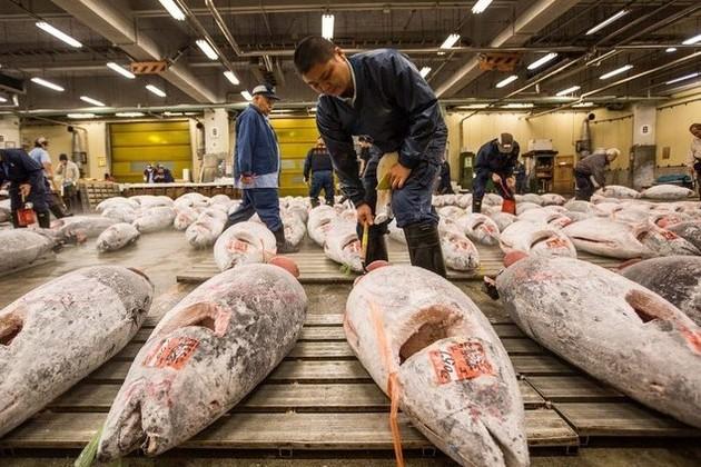 "Tsukiji Fish Market – ""Fish Wall Street"" in Tokyo"