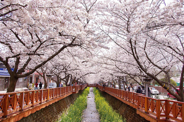 Best Things to Do and See in Busan, Korea