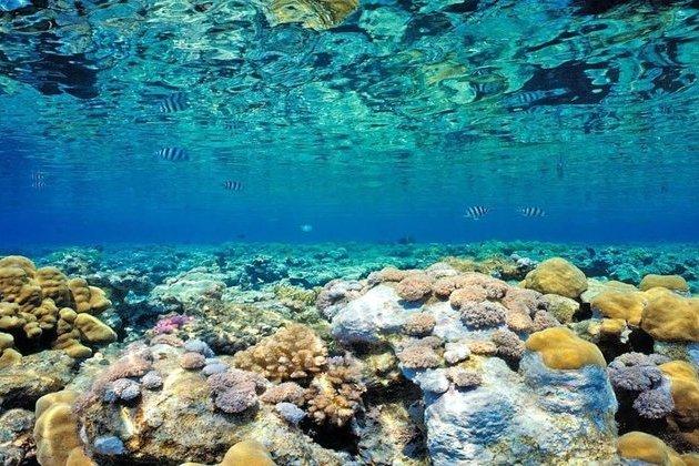 Kabira Bay glass bottom boat