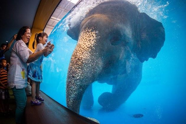 Khao Kheow Open Safari Park for Bangkok shore trips