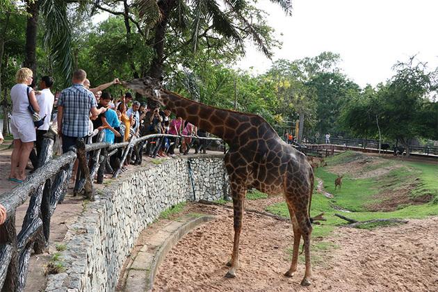 Khao Kheow Open Safari Park in Bangkok