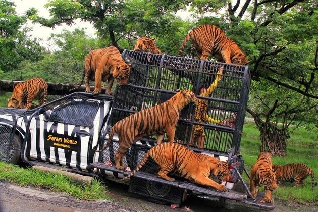 Safari World Bangkok - Open Zoo
