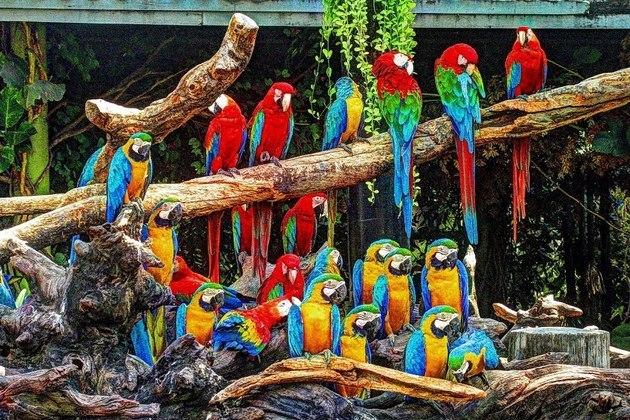 Safari World Bird park