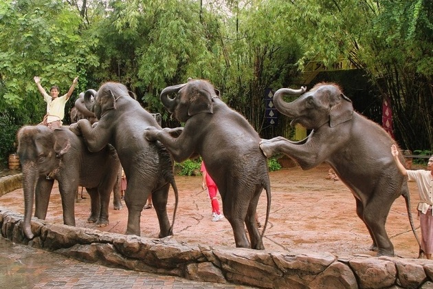 Safari World elephant show