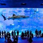Churaumi-Aquarium-in-Okinawa-day-tours