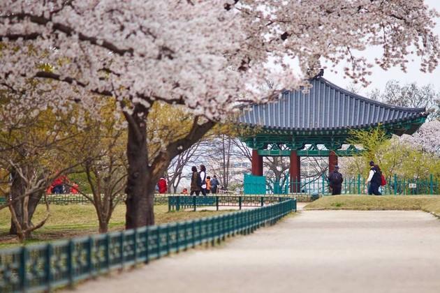Gyeongju Donggung Palace & Wolji Pond in Busan shore excursions