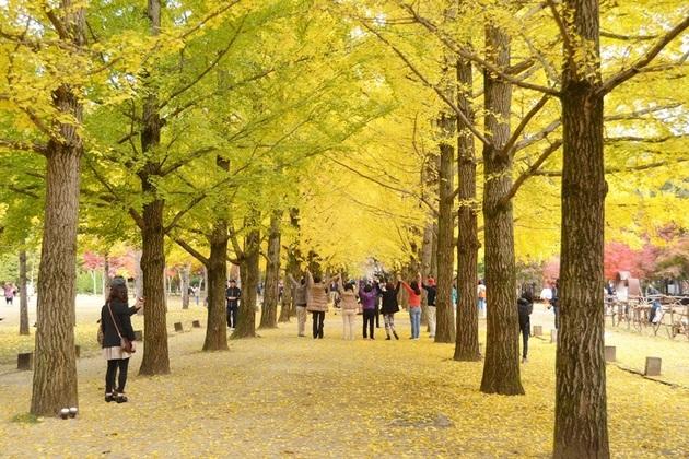 Korea weather in Autumn